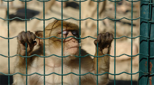 http://www.tigermag.com/wp-content/uploads/2011/10/monkey.jpg