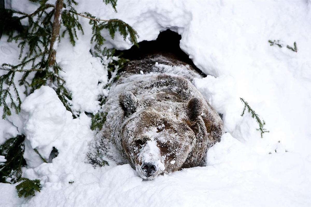 winter break hibernation  u2013 tiger magazine